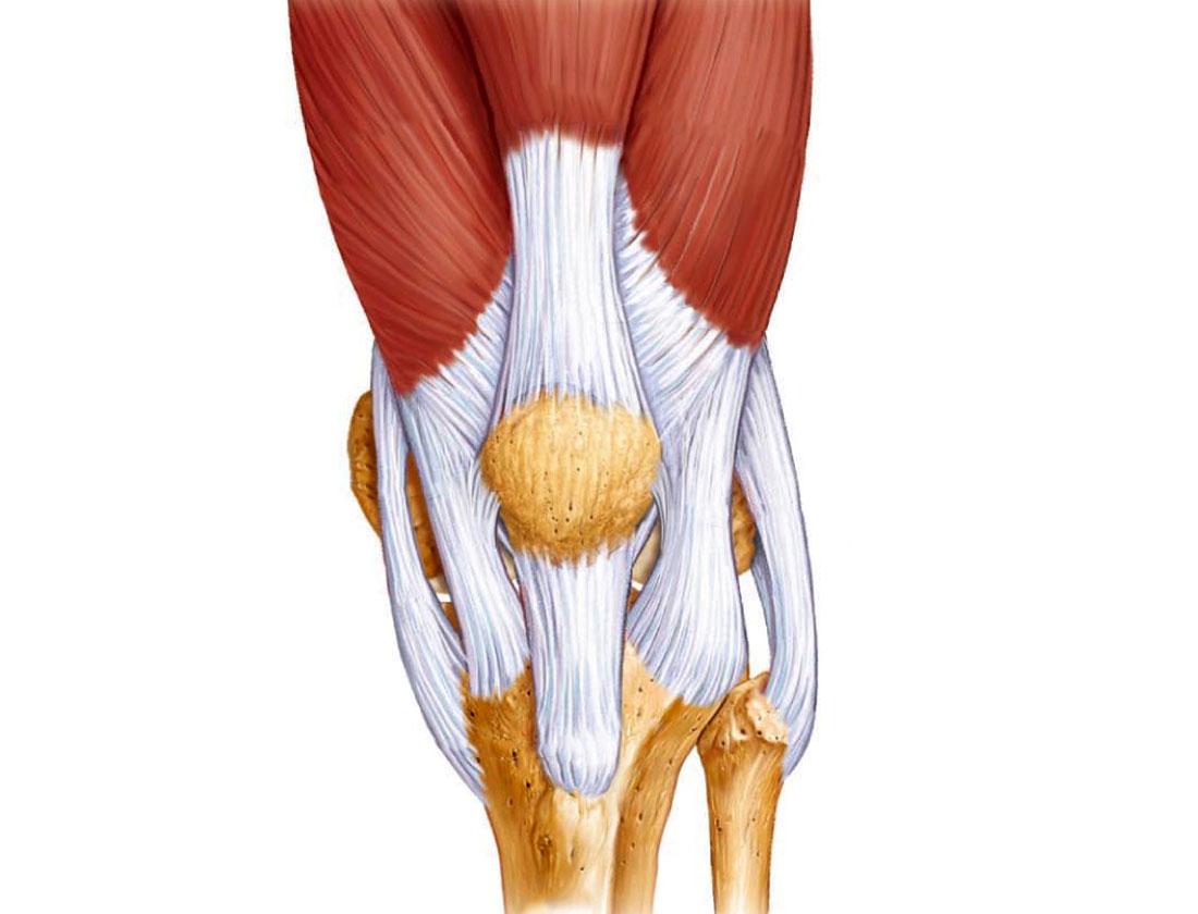 Лечение тендинита в коленном суставе традиционными способами и народными средствами
