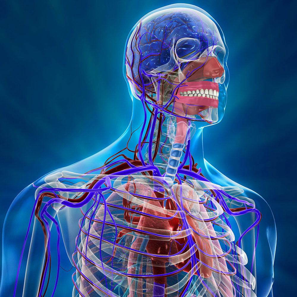 Атеросклероз брахиоцефальных артерий, как лечить поражения БЦА