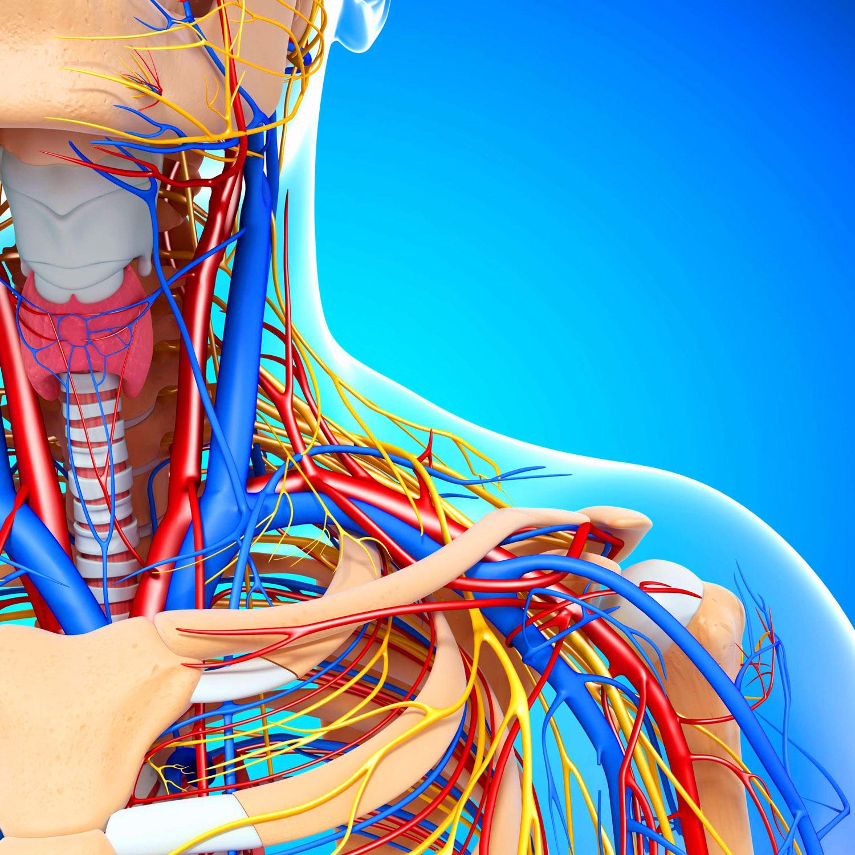 Атеросклероз сосудов шейного отдела - лечение и симптомы