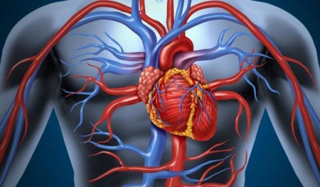 Сосуды сердца забиты на 70: побочные эффекты, признаки и лечение, проявления, рецепты