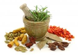 растительные препараты для терапии