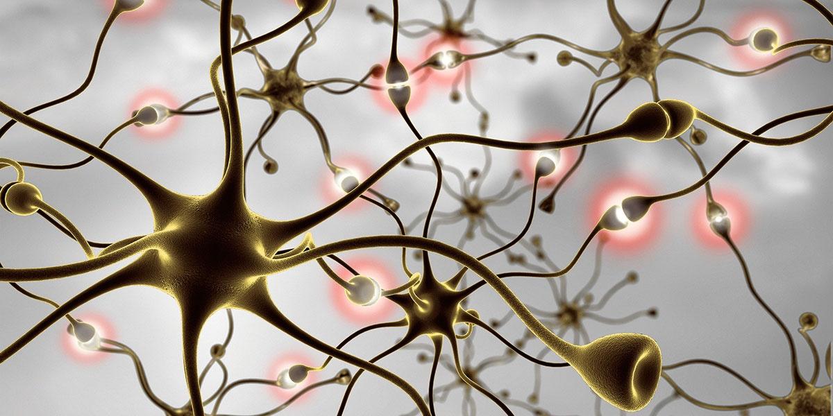 Что такое диффузные изменения головного мозга 🚩 диффузные изменения в биэлектрической активности 🚩 Заболевания