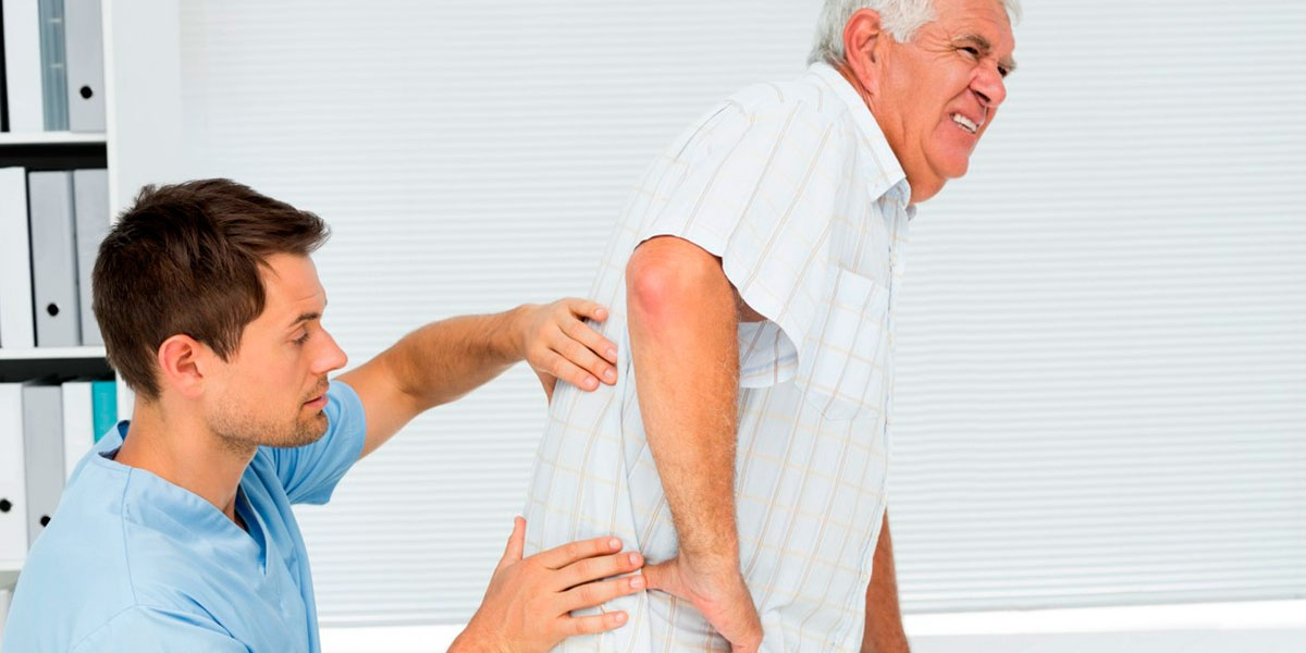 Функции корешков спинного мозга задних