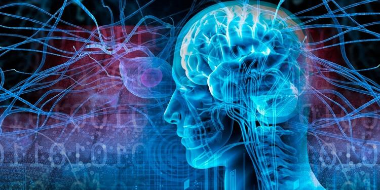 процессы мозга приводящие к развитию судорожных явлений