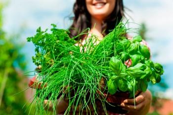 травы улучшающие работу мочеиспускательной системы