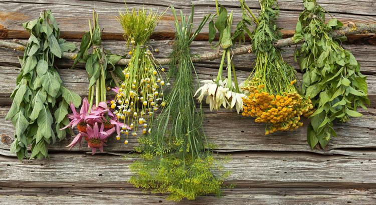 какие травы эффективны в лечении простатита