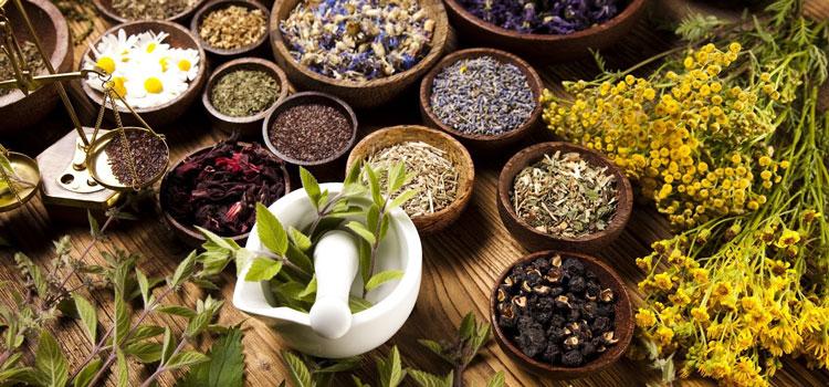 травы и сборы в нетрадиционной медицине