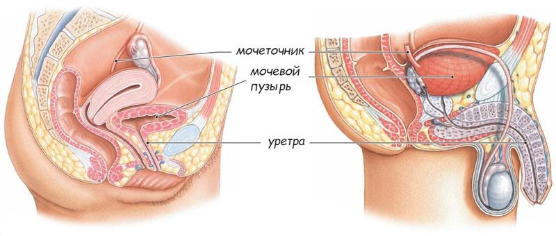 Простатит по женский если мужчина болеет простатитов