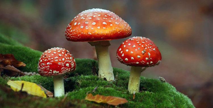 лечение грибами простатит